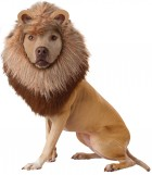 Lion Pet Costume_thumb.jpg