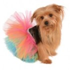 Rainbow Tutu Pet Costume_thumb.jpg