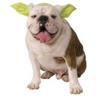 Star Wars Yoda Pet Headband Costume Accessory S/M_thumb.jpg