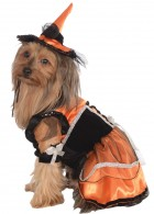 Orange Witch Pet Costume_thumb.jpg