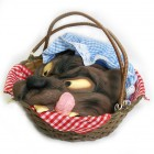 Basket with Wolf's Head Little Red Riding Hood  Costume Prop